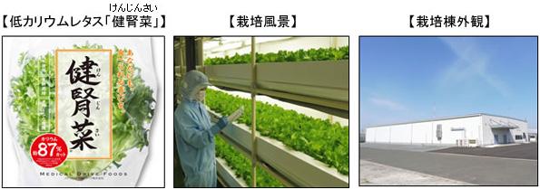 西部ガス、工場跡地を植物工場に 農薬不使用で低カリウムレタスを栽培