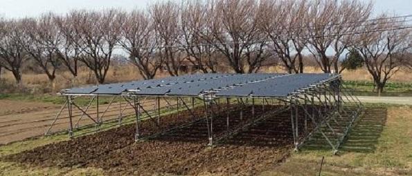 日照量が少ない佐渡島でソーラーシェアリング実証 東京大学など