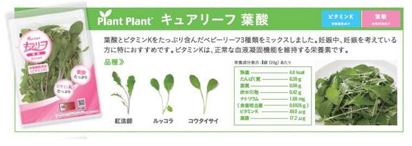 植物工場、葉酸やビタミンKなど豊富な野菜 「未病」対策食材としてブランド化