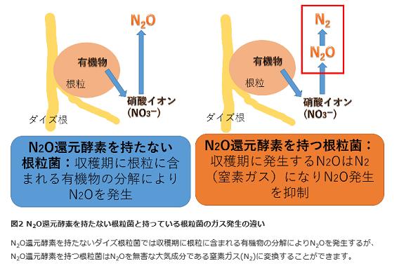 日本土着の微生物「根粒菌」にスゴイ効果 大豆畑から出る温室効果ガスを3割減