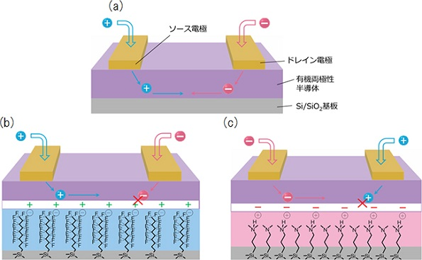 塗るだけで電子回路を作れる有機両極性半導体、省エネ化に成功