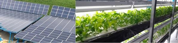 太陽光発電搭載の人工光型(LED)植物工場、分譲販売(1区画270万円~)