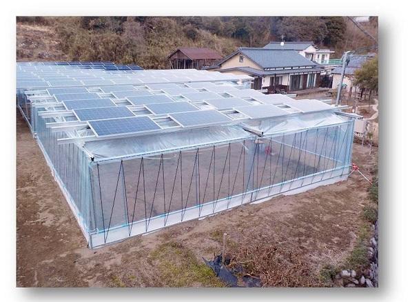 電気・作物を「W全量買い取り」するソーラーシェアリング事業