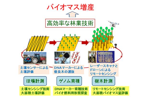 収量を向上させる「精密林業技術」3つ 木質バイオマス供給に展望