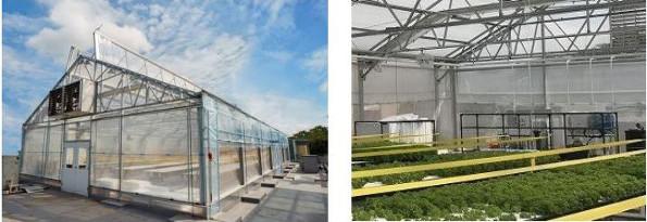 シンガポールの庁舎ビル屋上でも都市型農業 住友化学が実証試験