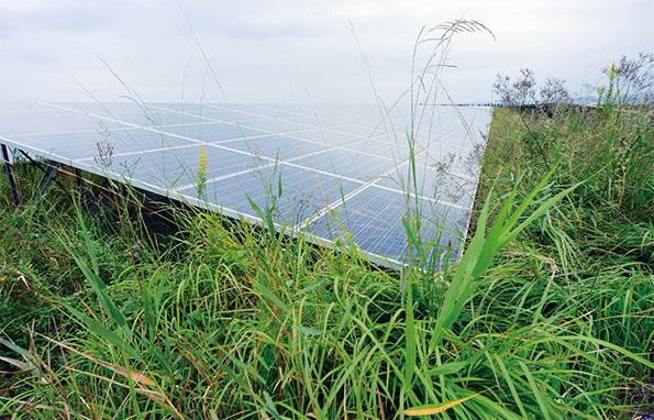 「雑草対策」が発電所の現場で深刻な課題になっている