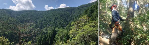 自社で約3000haの森林を保有し、社員が伐採から植林、育林、苗木生産まで行っている